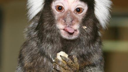 baby pet monkeys biting